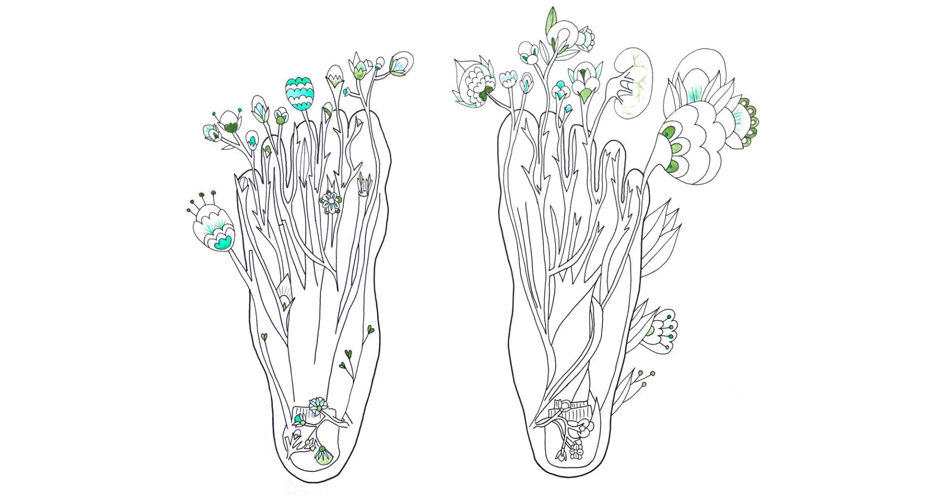 dessins pieds, herbier anatomique